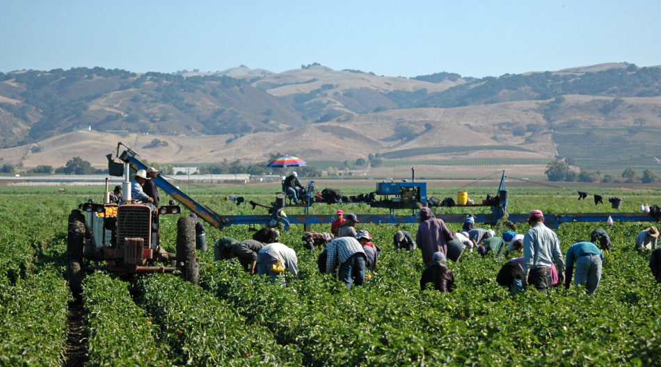 Trump Administration Looking To Cut The Already Low Wages Of H 2a Migrant Farmworkers While Giving Their Bosses A Multibillion Dollar Bailout Economic Policy Institute